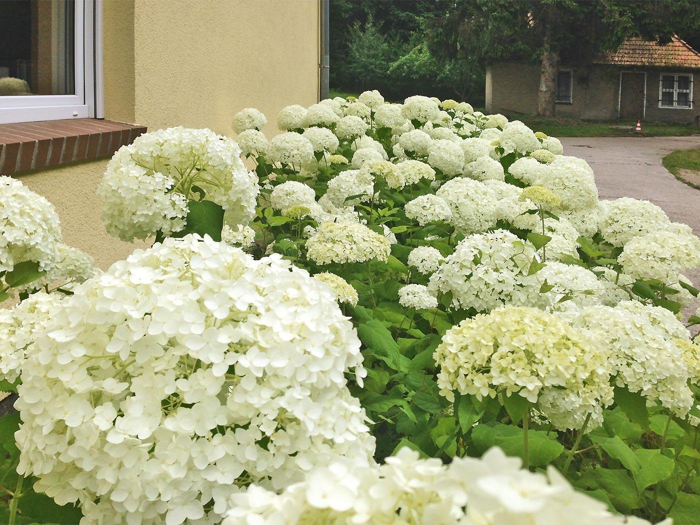 Gartenpflanzen Rostock