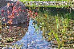 Gartenbau landschaftsbau rostock galabau outdoor design for Gartenteich mit goldfischen