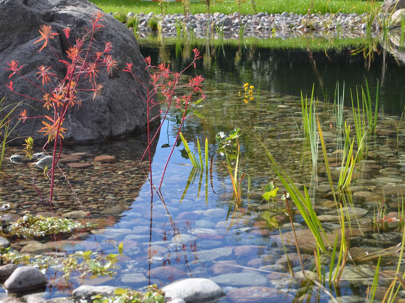Schwimmteich Uferzone Schwimmteich Uferzone